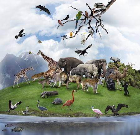 Wirtualna świetlica - Świat zwierząt